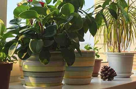 A Hobby for all Seasons: 4 HEALTH BENEFITS OF INDOOR PLANT